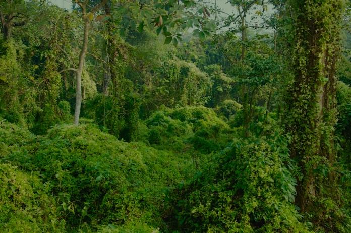 Rural Nepal, 2012